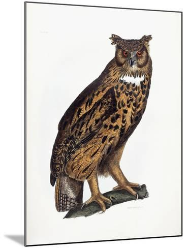 Great Eared Owl, 1841-Prideaux John Selby-Mounted Giclee Print