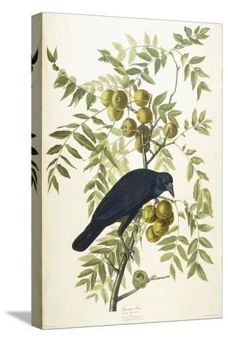 American Crow, 1833-John James Audubon-Stretched Canvas Print