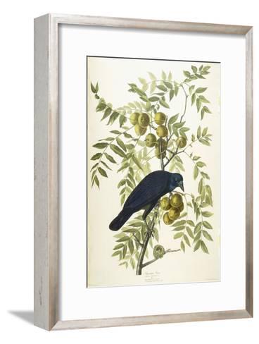 American Crow, 1833-John James Audubon-Framed Art Print