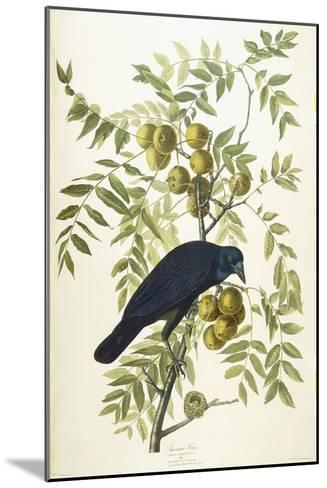 American Crow, 1833-John James Audubon-Mounted Giclee Print