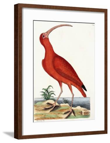 Curlew, Numenius, 1771-Mark Catesby-Framed Art Print