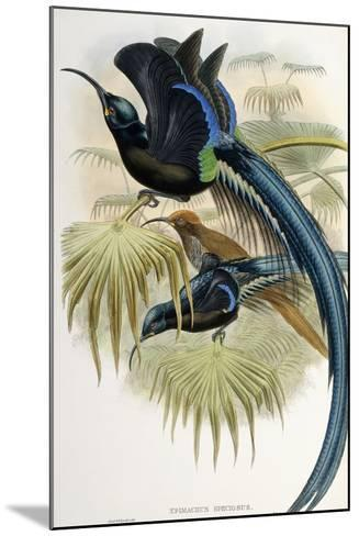 Great Sicklebilled Bird of Paradise--Mounted Giclee Print