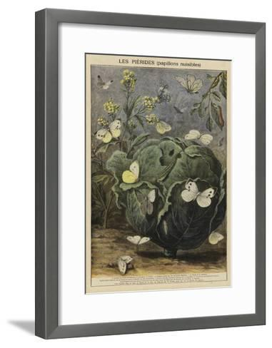 Pieridae--Framed Art Print