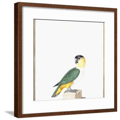Black-Capped Parrot-Nicolas Robert-Framed Art Print