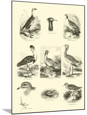 Page from the Pictorial Museum of Animated Nature--Mounted Giclee Print