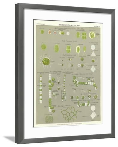 Protococcus, Water-Net--Framed Art Print