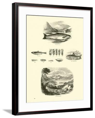 Page from the Pictorial Museum of Animated Nature--Framed Art Print