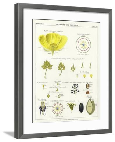 Buttercup and Columbine--Framed Art Print