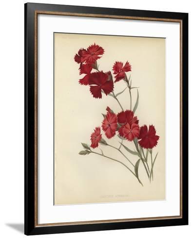 Dianthus Atkinsoni--Framed Art Print