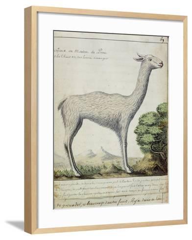 Sheep of Peru--Framed Art Print