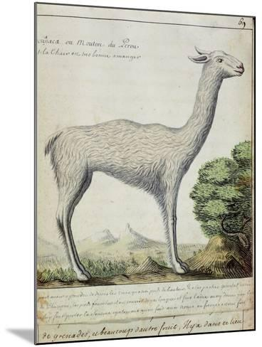 Sheep of Peru--Mounted Giclee Print