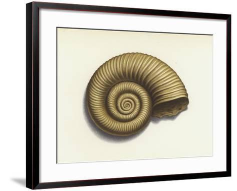 Ammonite--Framed Art Print