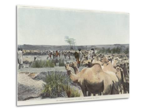 Watering the Camels at the Source in the Desert--Metal Print