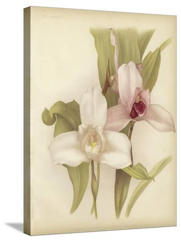 Lycaste Skinneri and White Variety--Stretched Canvas Print
