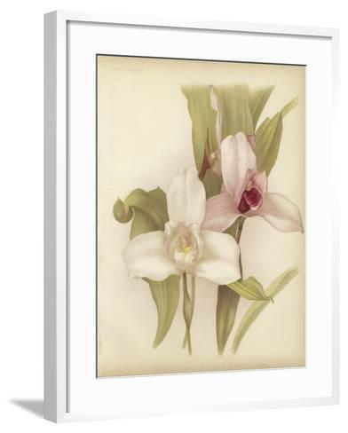 Lycaste Skinneri and White Variety--Framed Art Print