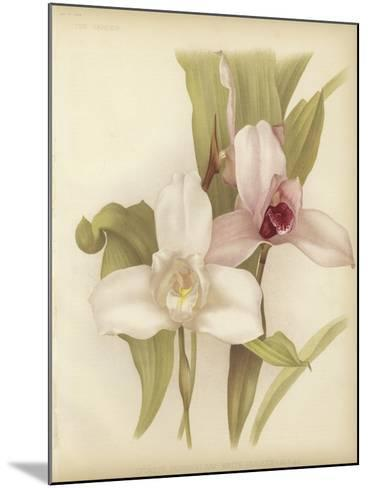 Lycaste Skinneri and White Variety--Mounted Giclee Print