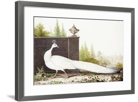 White Peacock-Nicolas Robert-Framed Art Print