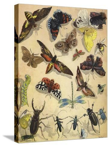 Insects-Richard Andre-Stretched Canvas Print