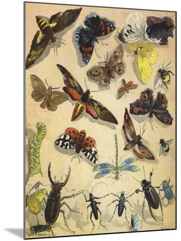 Insects-Richard Andre-Mounted Giclee Print