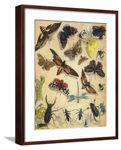 Insects-Richard Andre-Framed Art Print