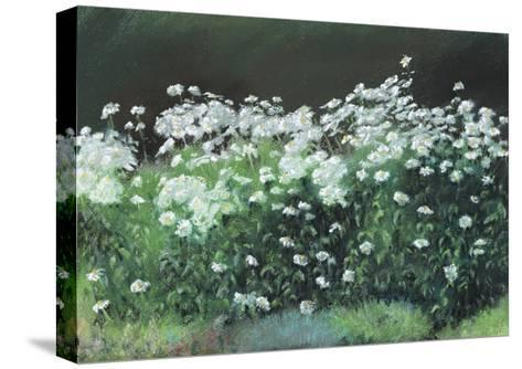 Shasta Daisies, 1992-Anthony Rule-Stretched Canvas Print