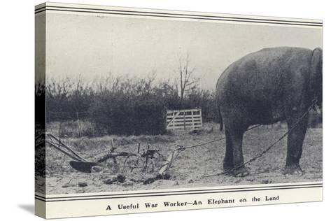 A Useful War Worker - an Elephant on the Land--Stretched Canvas Print