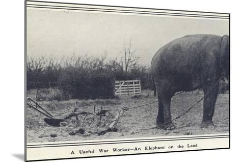 A Useful War Worker - an Elephant on the Land--Mounted Photographic Print