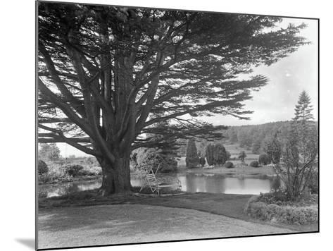 Gardens at Brinsop Court-Frederick Henry Evans-Mounted Photographic Print