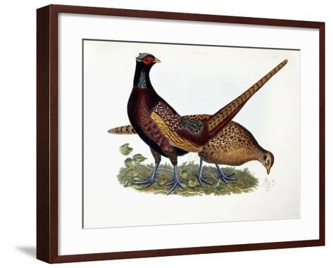 Pheasants-Prideaux John Selby-Framed Art Print