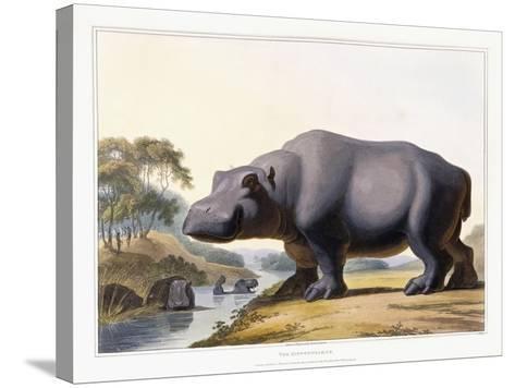 The Hippopotamus, 1804-Samuel Daniell-Stretched Canvas Print