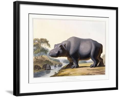 The Hippopotamus, 1804-Samuel Daniell-Framed Art Print