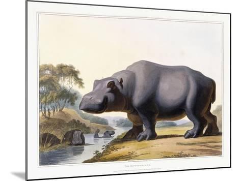 The Hippopotamus, 1804-Samuel Daniell-Mounted Giclee Print