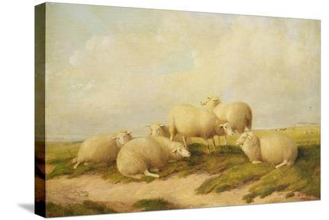 Sheep-Thomas Sidney Cooper-Stretched Canvas Print
