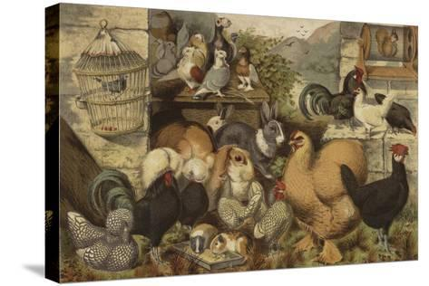 Boys' Pets--Stretched Canvas Print