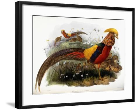 Thaumalea Picta--Framed Art Print
