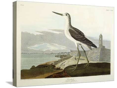 Greenshank, View of the St, 1835-John James Audubon-Stretched Canvas Print