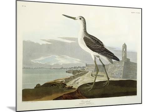 Greenshank, View of the St, 1835-John James Audubon-Mounted Giclee Print