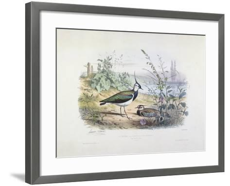 Female and Male Lapwing-Edouard Travies-Framed Art Print