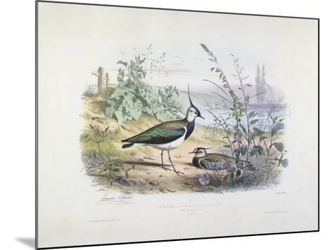 Female and Male Lapwing-Edouard Travies-Mounted Giclee Print