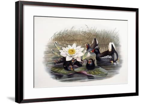 Gallinula Chloropus-John Gould-Framed Art Print