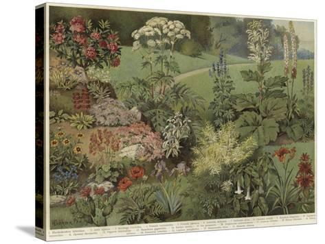 Ornamental Plants--Stretched Canvas Print