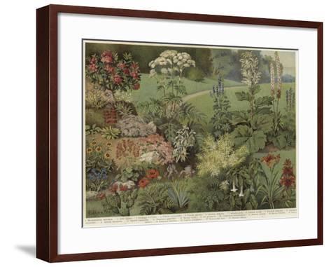 Ornamental Plants--Framed Art Print