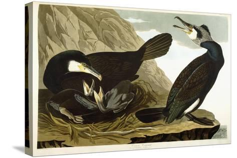 Common Cormorant, 1835-John James Audubon-Stretched Canvas Print