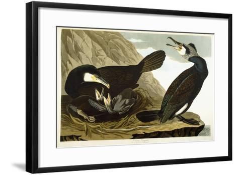 Common Cormorant, 1835-John James Audubon-Framed Art Print