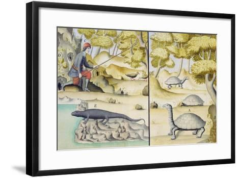 Animals Encountered in the Galapagos Islands--Framed Art Print