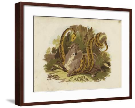 Cow Being Squeezed by Serpent--Framed Art Print
