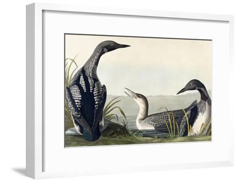 Black-Throated Diver-John James Audubon-Framed Art Print
