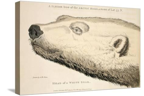 Head of a White Bear, Illustration from 'A Voyage of Discovery...', 1819-Andrew Motz Skene-Stretched Canvas Print