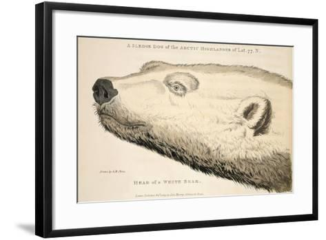 Head of a White Bear, Illustration from 'A Voyage of Discovery...', 1819-Andrew Motz Skene-Framed Art Print