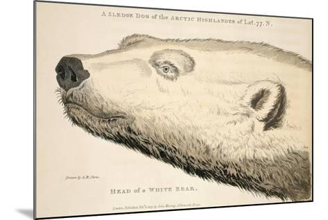 Head of a White Bear, Illustration from 'A Voyage of Discovery...', 1819-Andrew Motz Skene-Mounted Giclee Print
